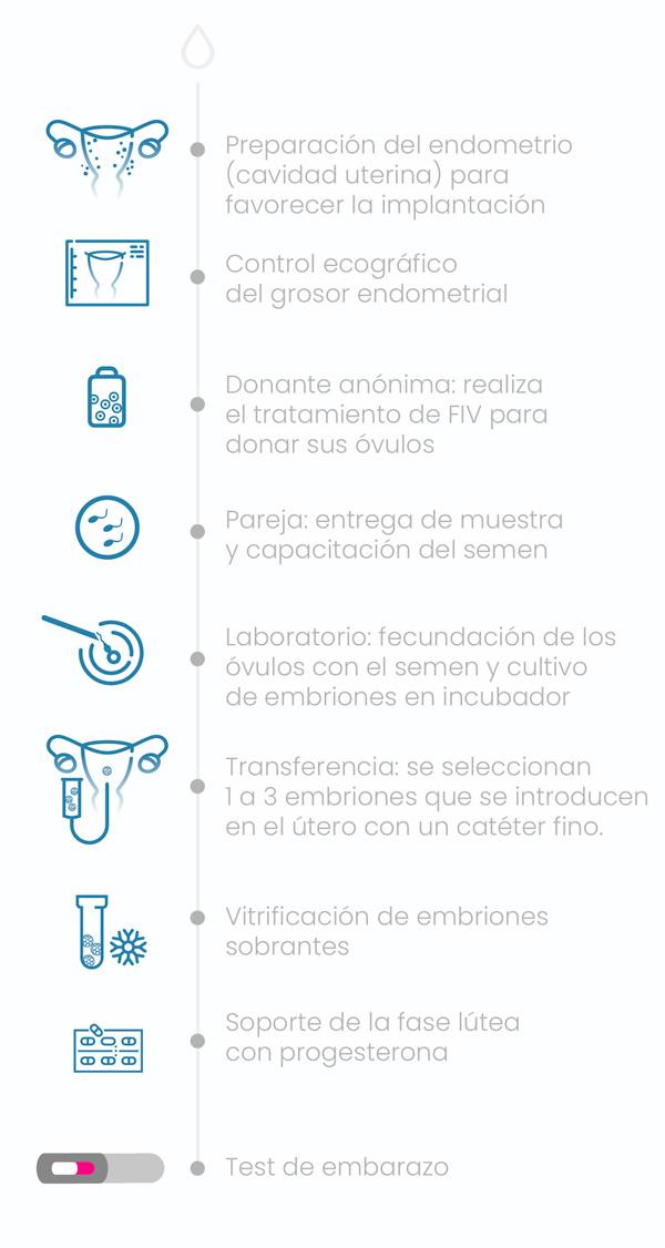 Fecondazione in vitro - Fecondazione in vitro con ovuli di donatrice